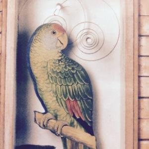Cornell parrot